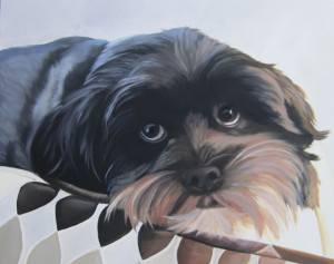pet portrait, animal portrait,