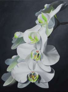 Painting of Several White Orchids on a black background