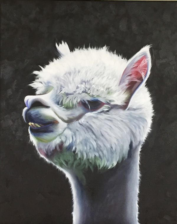 Baby Alpaca oil painting on canvas by Amy Hillenbrand